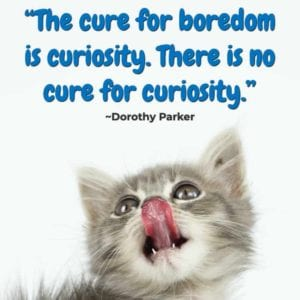 """The cure for boredom is curiosity. There is no cure for curiosity."" ~Dorothy Parker"